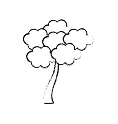 sketch tree sakura japanese flora vector image