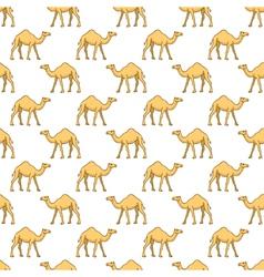 Camels pattern vector