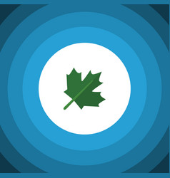 isolated maple flat icon oaken element can vector image