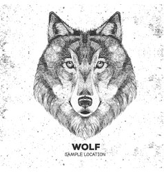 Retro hipster animal wolf hand drawing muzzle vector