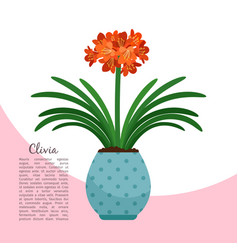 clivia plant in pot banner vector image vector image