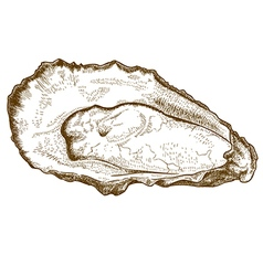 Engraving oyster vector