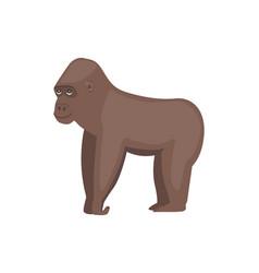 Gorilla african animal vector
