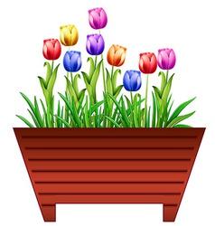 Tulips vector image vector image