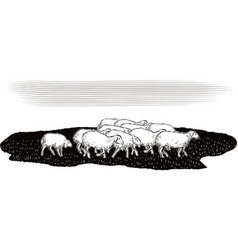 Flock of sheep in a meadow vector