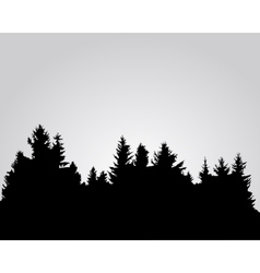 Silhouette of spruce forest vector