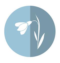 Amaryllis flower decorative shadow vector