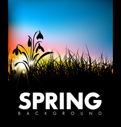 spring grass dawn background vector image vector image