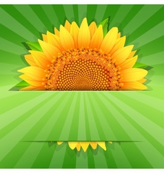 Summer sunflower poster template vector