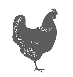 Chicken Isolated on white background vector image vector image