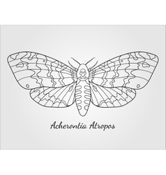 Hand drawn hawk moth silhouette vector image
