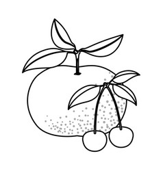 Monochrome background with fruits tangerine and vector