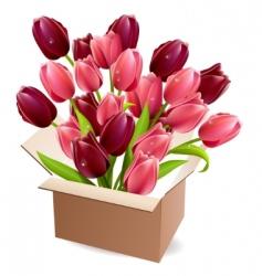 open box full of tulips vector image