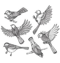 Ste of hand drawn ornate birds vector