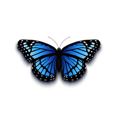 Realistic butterfly icon isolated on white vector