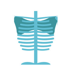 Bone chest anatomy body medical vector