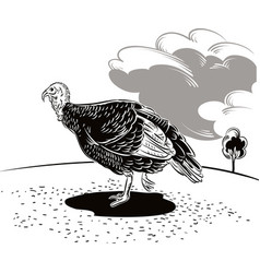 A female turkey scratching for food vector