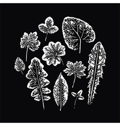 Set of leaf imprints vector