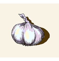 Garlic sketch vector