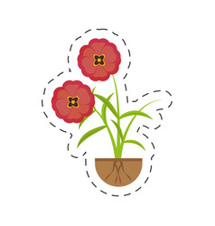 Buttercup flower growing spring vector