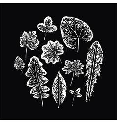 Set of Leaf imprints vector image
