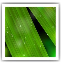 Macro leaf vector