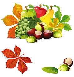 Autumn fruit and leaves - vector