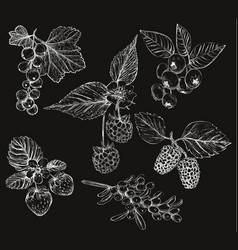 sketch of berries set of vector image vector image