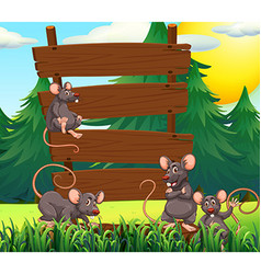 Rats and wooden signs in the garden vector image vector image