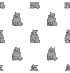 Exotic shorthair icon in cartoon style isolated on vector