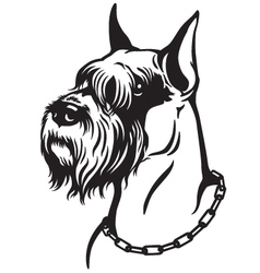 Schnauzer black white vector