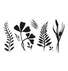 Set with plants herbs and grasses painted ink for vector