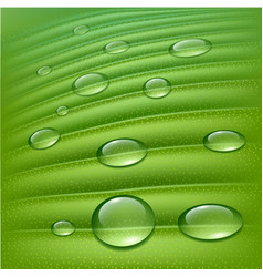 water drops on fresh green vector image vector image