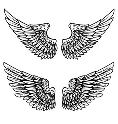 Set of the eagle wings isolated on white vector