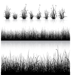 Grass silhouette isolated on white vector