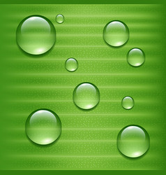 Water drops on green leaf vector