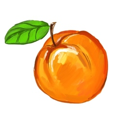 Peach of ink hand drawn vector