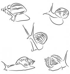 Achatina snail vector image