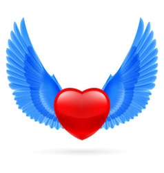 Heart with raised wings vector