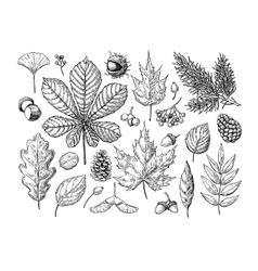 Autumn set with leaves berries fir cones vector