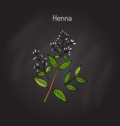 Henna or hina vector