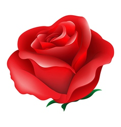 A red rose vector