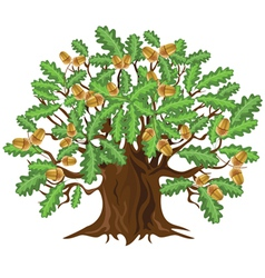 Big green oak tree with acorns vector image vector image