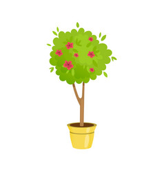 Lush gardening tree in a pot with flowers vector
