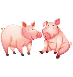 Two fat pigs with happy face vector image vector image