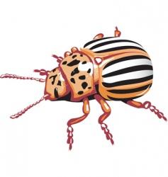 Colorado potato beetle vector vector