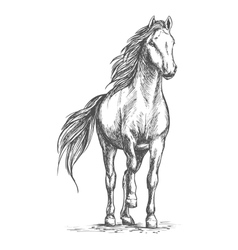 Sketched portrait of horse vector image