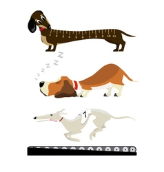 Dachshound basset greyhound vector