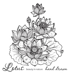 Beautiful monochrome floral bouquet of lotus vector