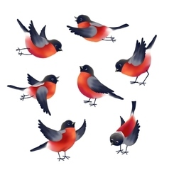 Bullfinches vector image